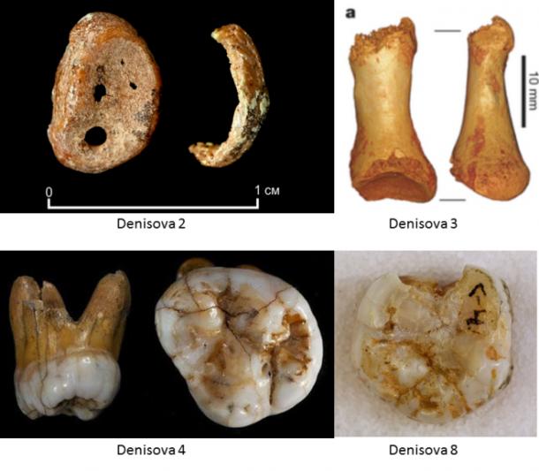 Los 4 restos denisovanos (Imagen: Max Planck Institute, en Nutcracker Man de Roberto Sáez)