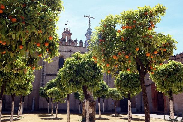 Patio de los naranjos Monasterio San Isidoro del Campo.     Foto: Fran Rodgue