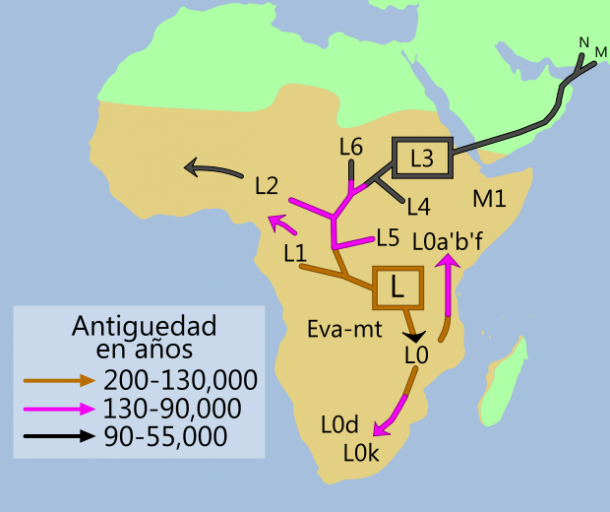 Ascendencia africana de los humanos modernos en haplogrupos mitocondriales (Autor: Wikipedia, basado en un trabajo original de Maulucioni)