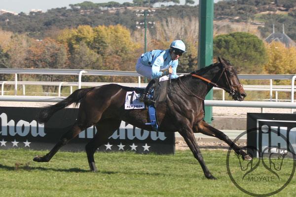 Almorox ganando fácil el Gran Premio de la Hispanidad en el Hipódromo de la Zarzuela. FUENTE: Amigos del Moyate