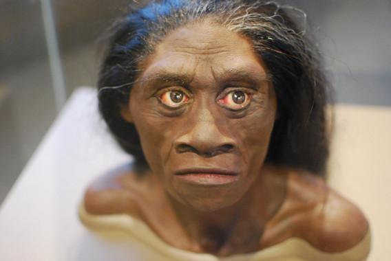 Reconstrucción de una mujer de Homo floresiensis (Autor: Karen Neoh en la web del Servicio de Información y Noticias Científicas (SINC) de España).