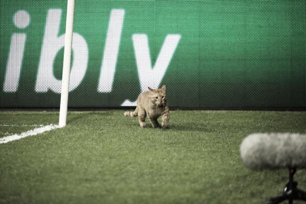 La figura de la noche: el gato colorado | fuente: @FCBayern