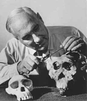Louis Leakey (1903-1972) examina uno de los cráneos africanos. PD