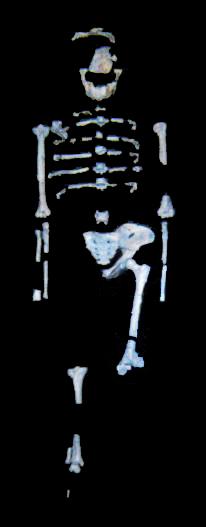 Esqueleto de Lucy, hallado por Donald  Johanson en 1974. PD