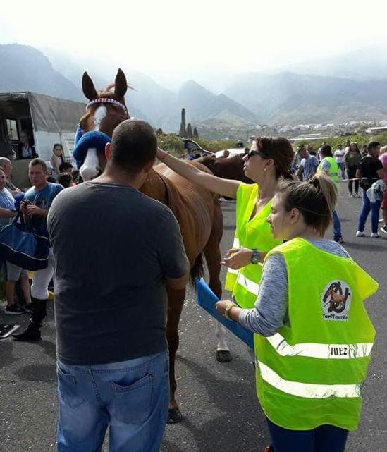 Los veterinarios y los jueces observando a los caballos antes de la carrera | Foto: José Minguilón