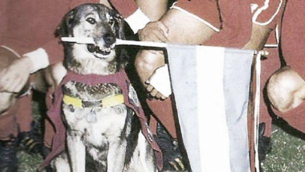Boneco, el perro de Independiente