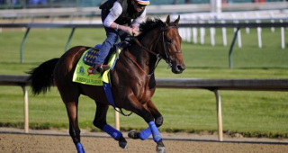 live american horse racing results