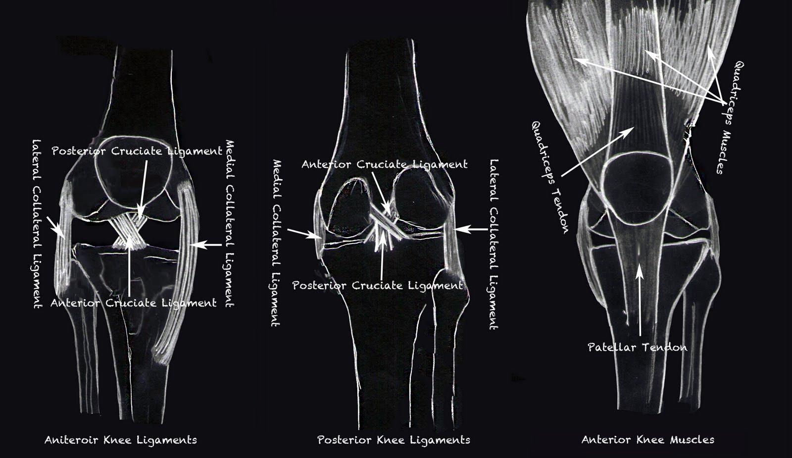 Morfología de la rodilla desde diferentes perspectivas. Fotografía: ExercisesBasics.net.