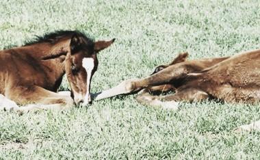 Foals | Foto: Darley Stud