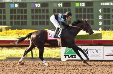 Shared Belief is the 9-5 morning line favorite for the Breeders' Cup Classic (AP Photo/Benoit Photo)