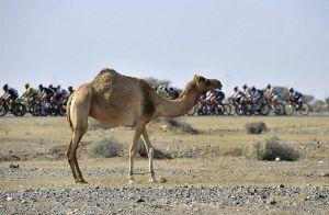 Previa | Tour de Omán: 4ª etapa, Sultan Qaboos Grande Mosque - Jabal Al Akhdhar