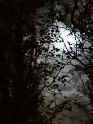 La Luna y la Enfermedad
