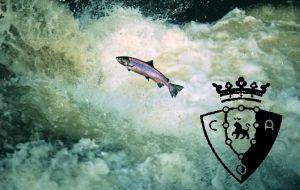 El salmón en el río Sadar
