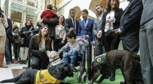 Madrid abre las puertas de sus espacios públicos a todos los perros de asistencia