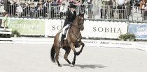 Jeux Équestres Mondiaux : le récital de Dujardin et toute la cinquième journée