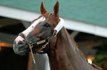 Why A Triple Crown Winner Does Not Solve Horse Racing's Real Problems