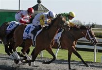 Keeneland Releases Fall 2014 Stakes Schedule
