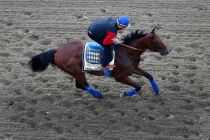 Preakness 2015 Live Results in Horse Racing Today