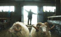 Crítica de 'Rams: el valle de los carneros': los islandeses también lloran