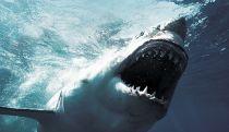 'In thedeep', la nueva película sobre tiburones que prepara Sony