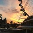 Live Gp di Singapore: Nico Rosberg vince il Gp di Singapore. Ricciardo 2°, Hamilton 3°! Raikkonen chiude ai piedi del podio. Grande Vettel, che rimonta fino al 5° posto