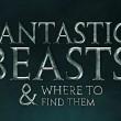 El cáliz de fuego se cuela en 'Animales Fantásticos y Dónde Encontrarlos'