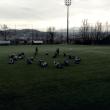 Pescara - Riprendono gli allenamenti a suon di gradoni